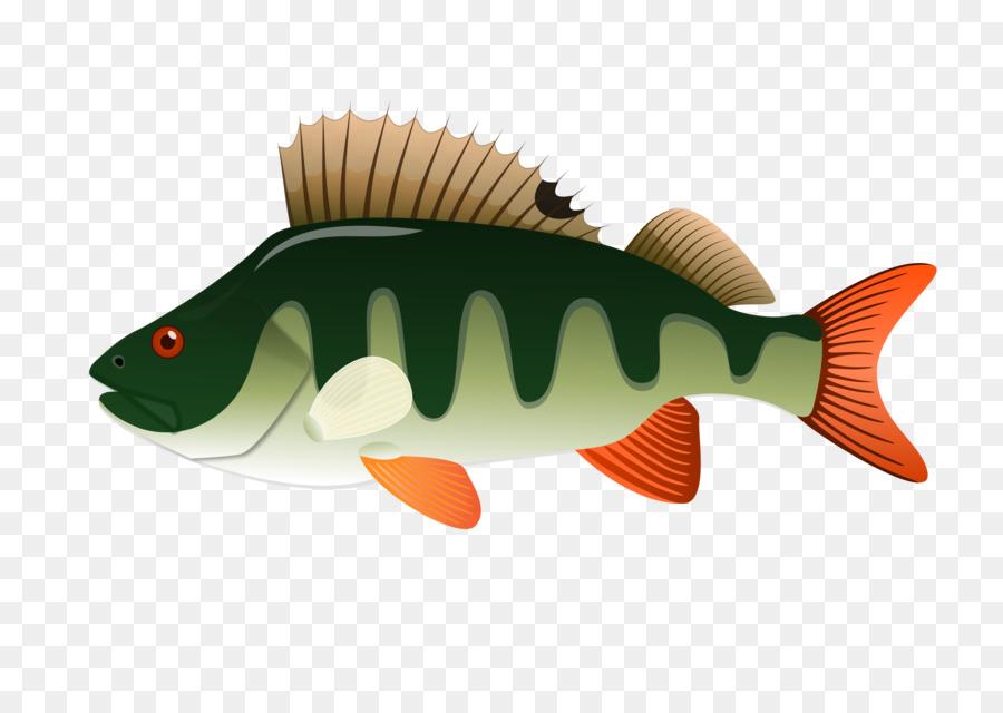 шикарный картинки рыба окунь на белом фоне условиях сложной