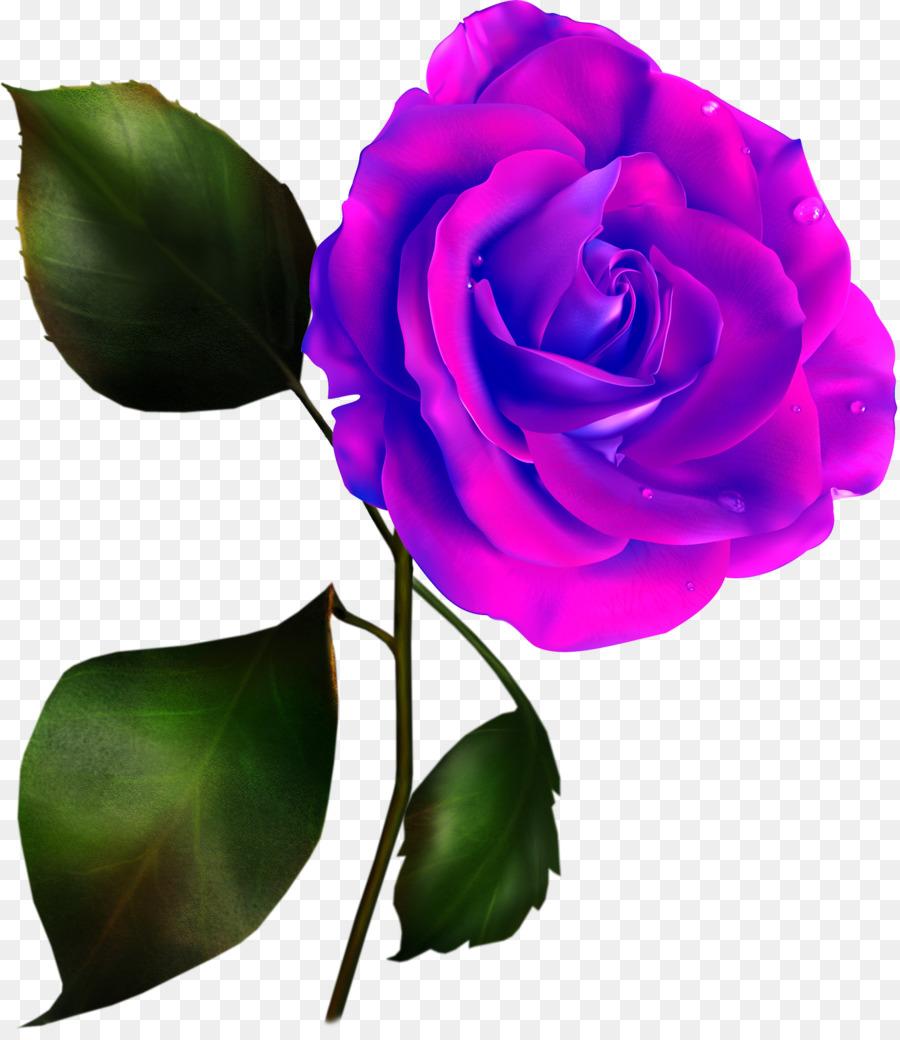 Картинка розы без фона