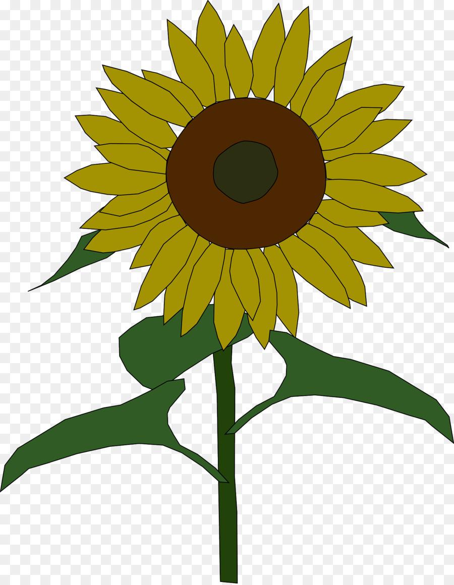 Соняшник картинки для детей