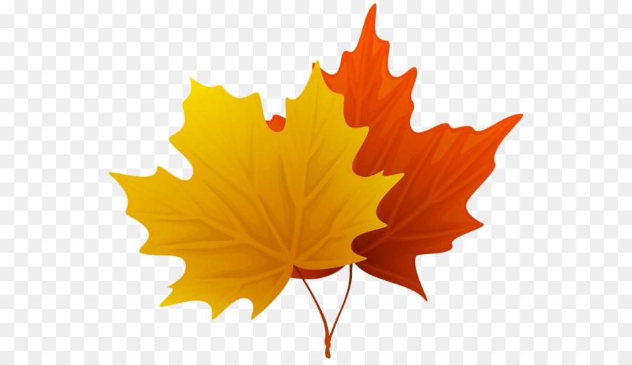 Картинки кленовые листочки осенние, яндекс февраля