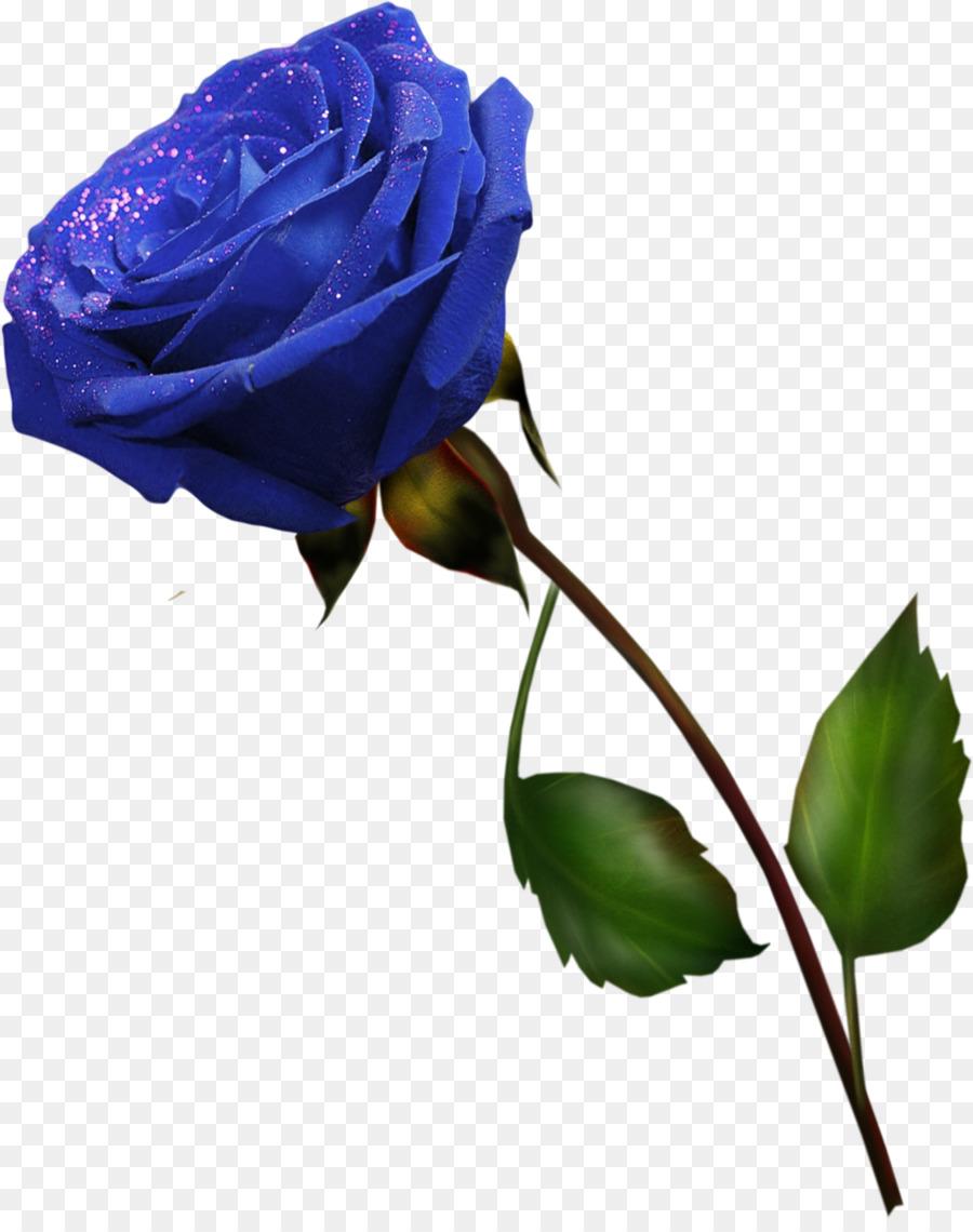 Картинки фиолетовые розы на белом фоне, праздником наурыз