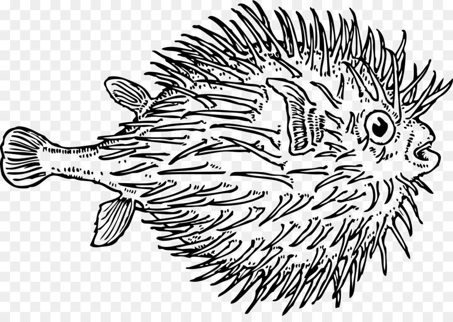 владивостоке неравнодушные морской еж рисунок завязать изделие