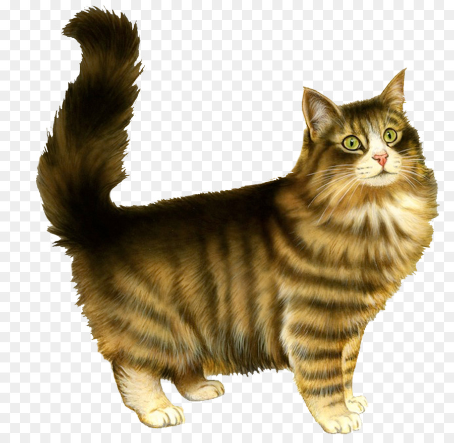 полосатый кот картинка на прозрачном фоне тату жасмин