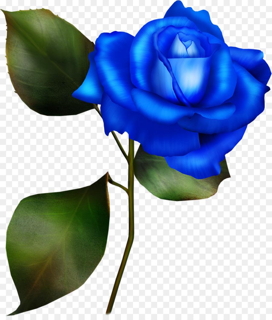 Синие розы на белом фоне картинки