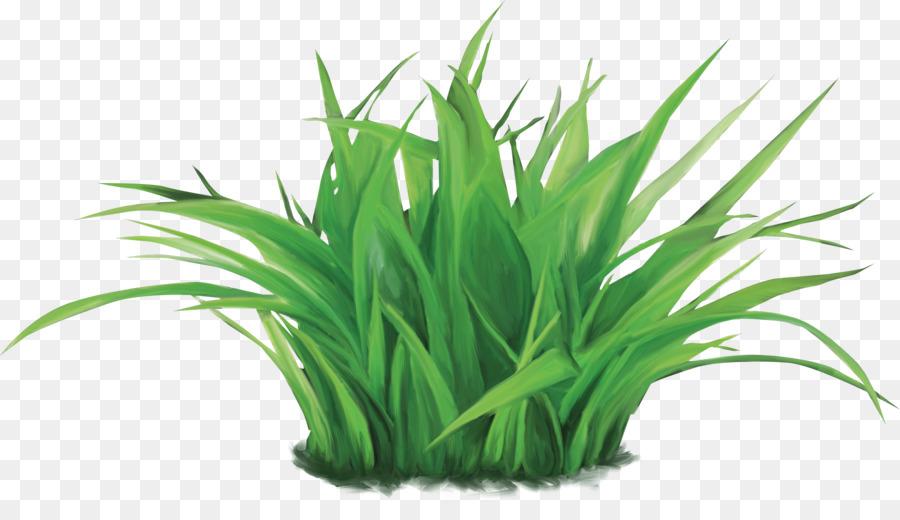 Трава на белом фоне картинка