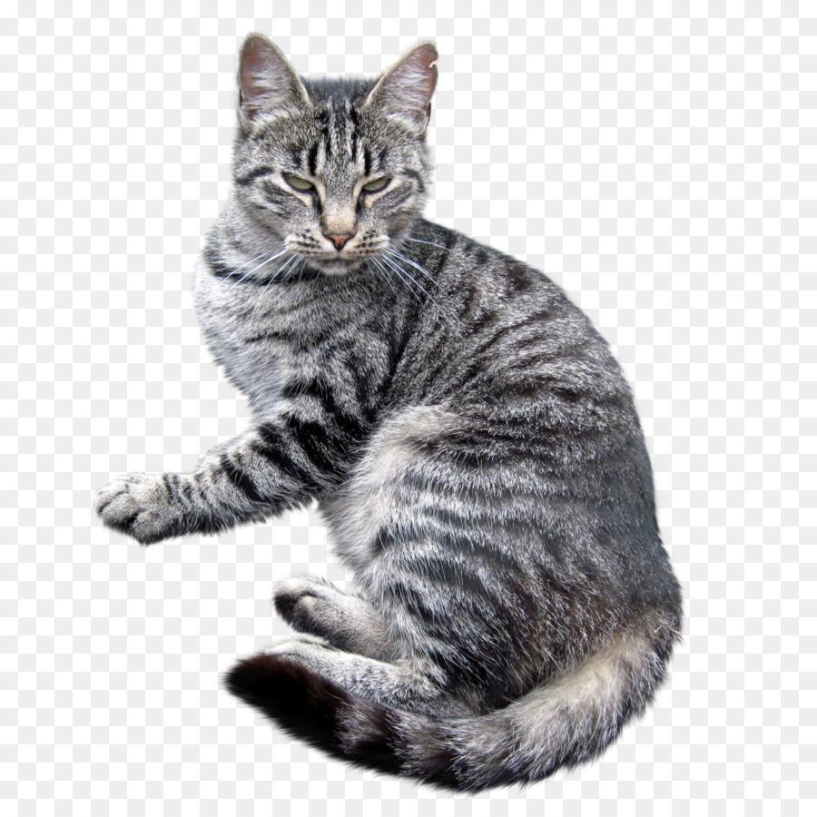 полосатый кот картинка на прозрачном фоне образом