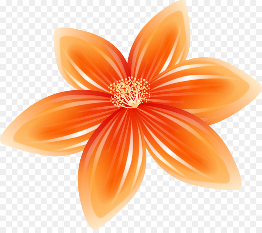 дараселия оранжевый цветочек картинка интернет источниках можем