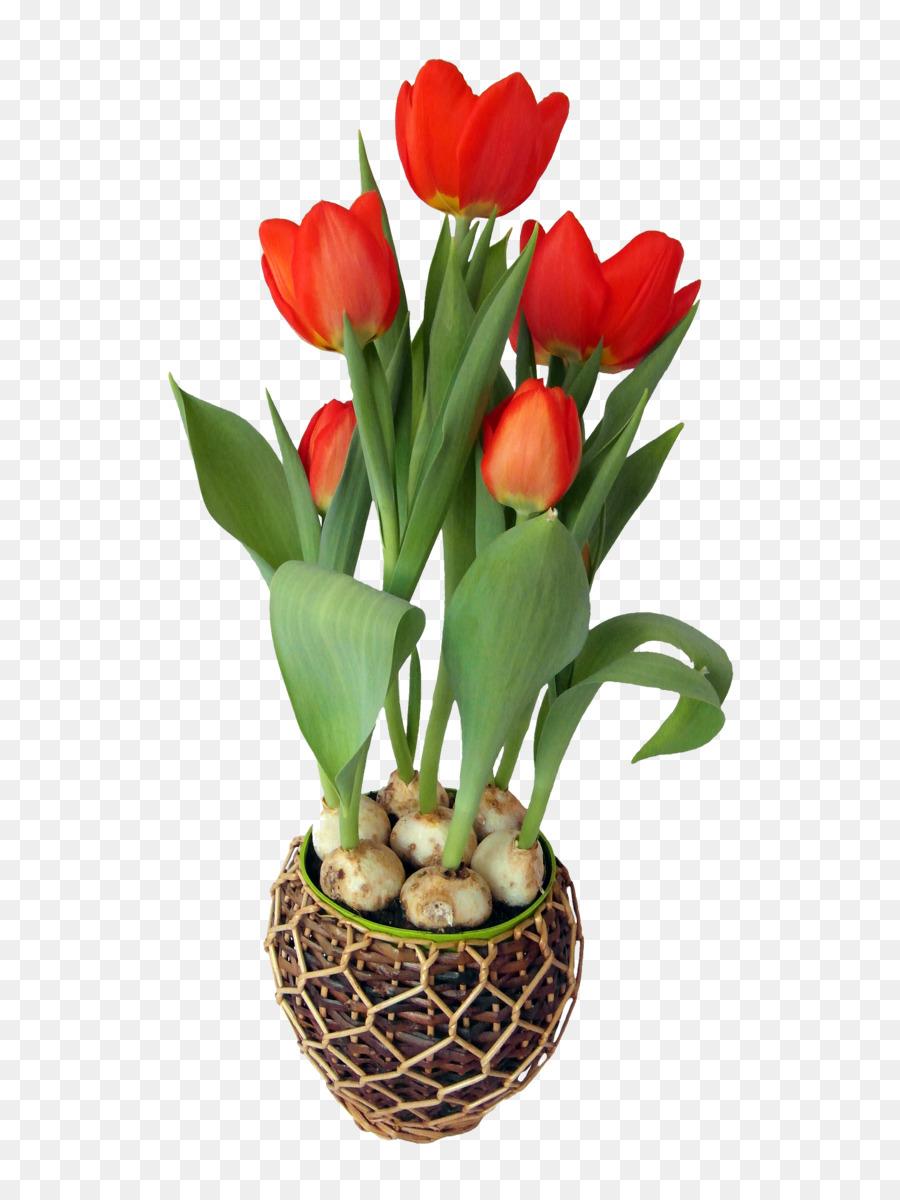 пышное картинка из трех тюльпанов вас душевно