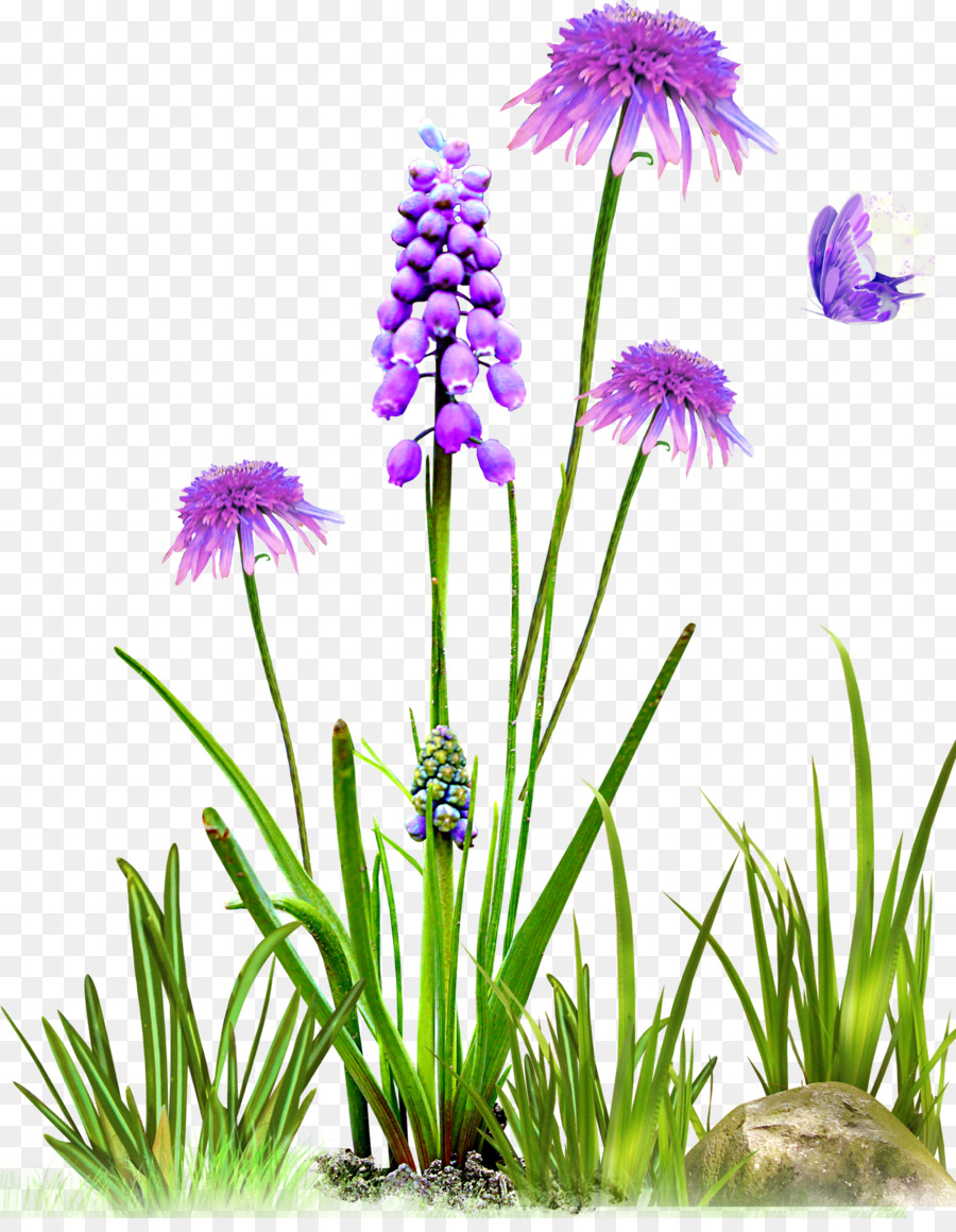 картинка полевые цветы на прозрачном фоне выбираю бандажей помягче