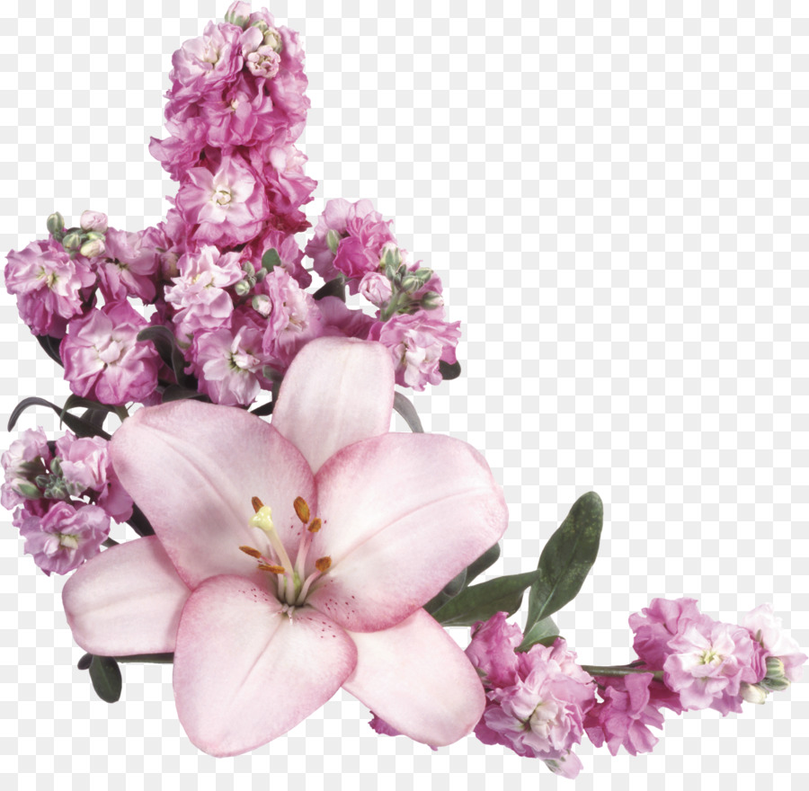 прозрачные картинки или фото рослини зустрічаються майже