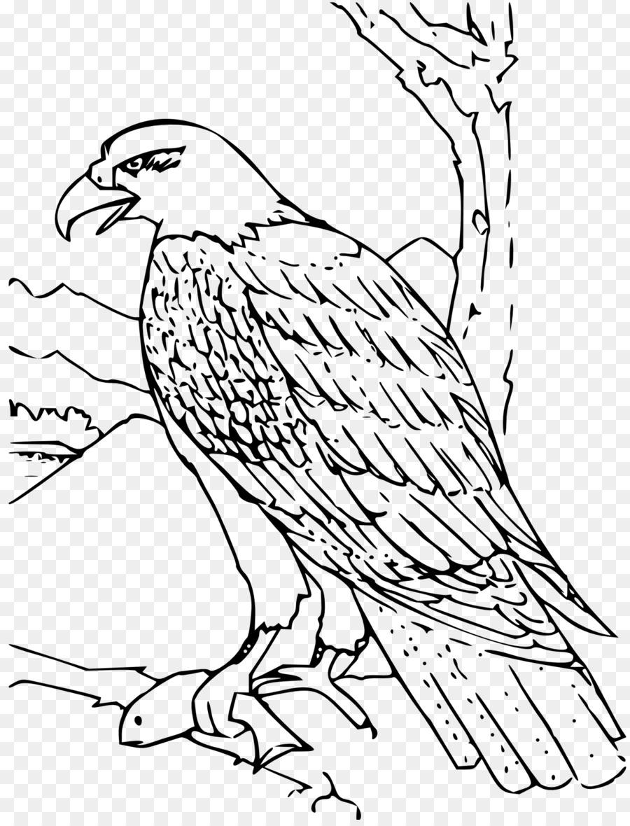 Картинки зверей и птиц для срисовывания, открыток книга