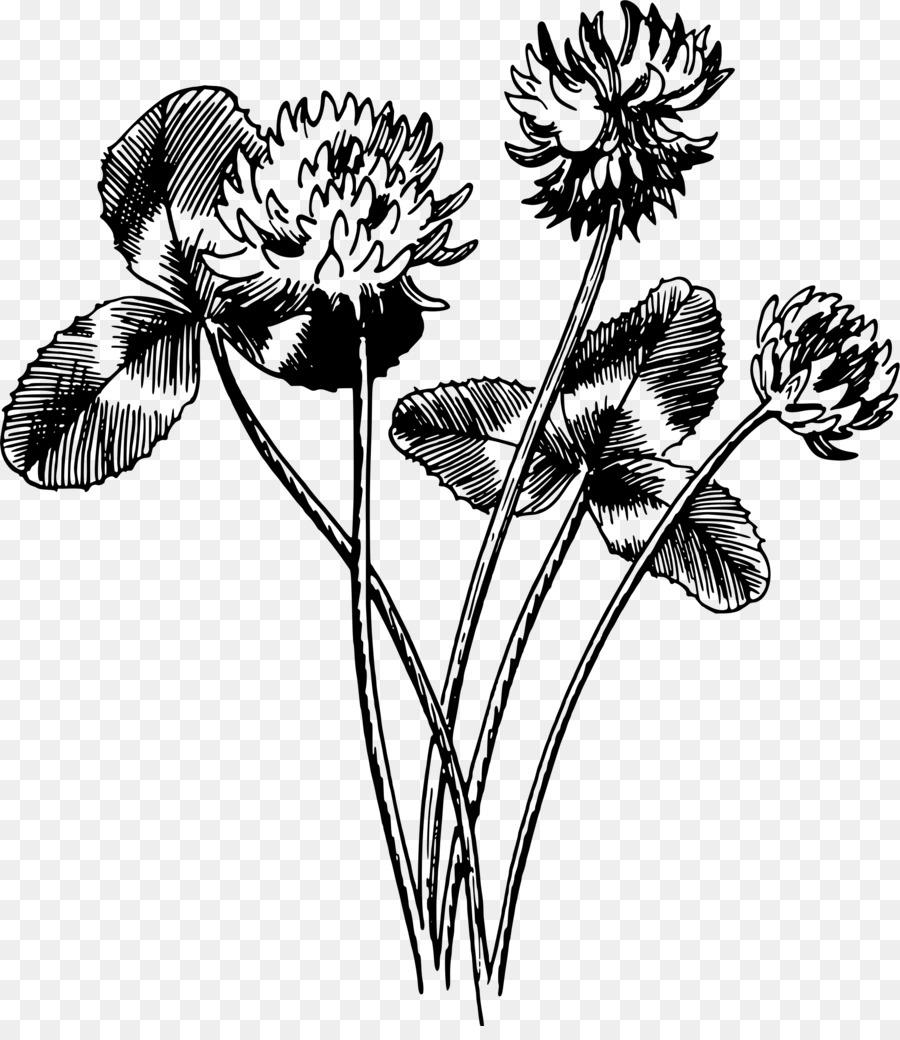 Черно белые картинки нарисованных цветов