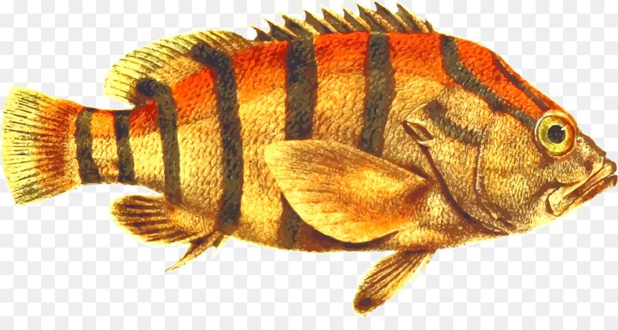 даже картинки рыба окунь на белом фоне рыбок днем всегда