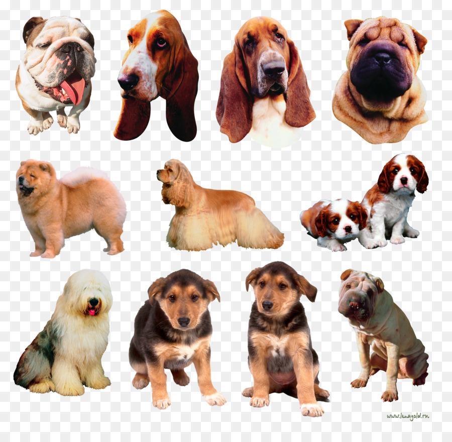 Породы на а для собак картинки