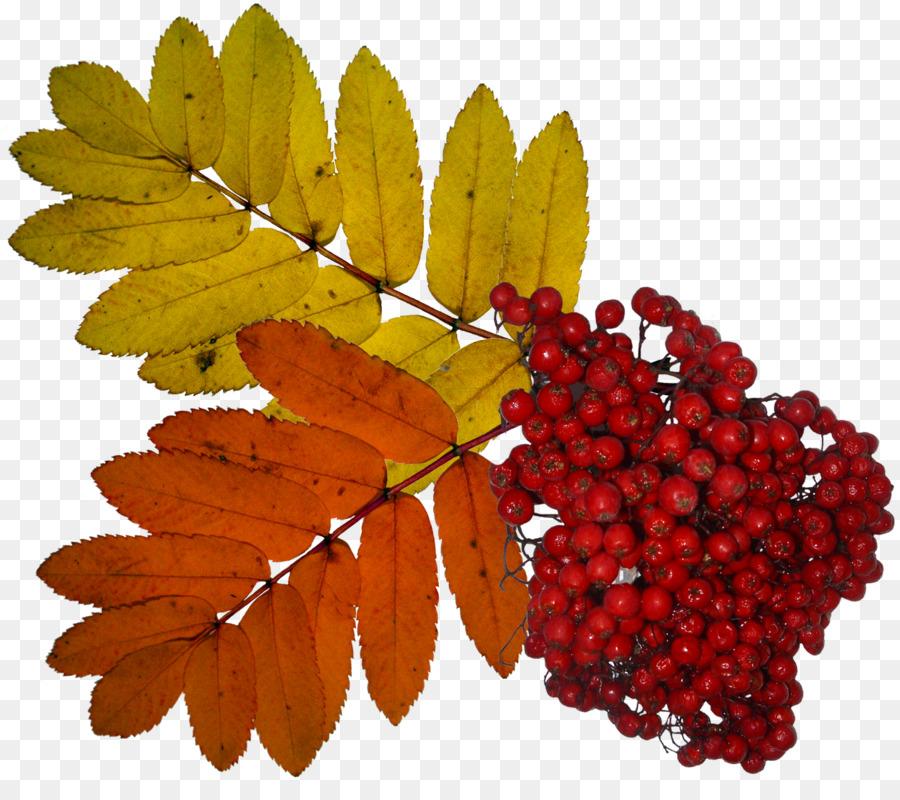 картинки осенняя листва рябина свой успех