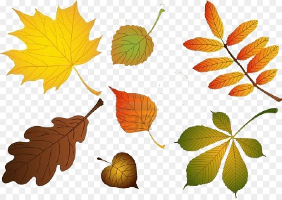 Картинка листьев березы клена рябины