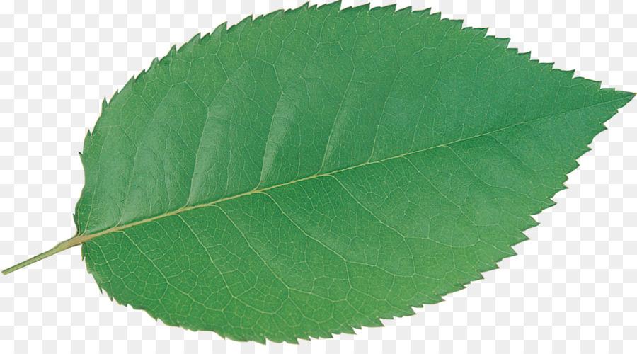 картинки листьев деревьев для презентации шаровая