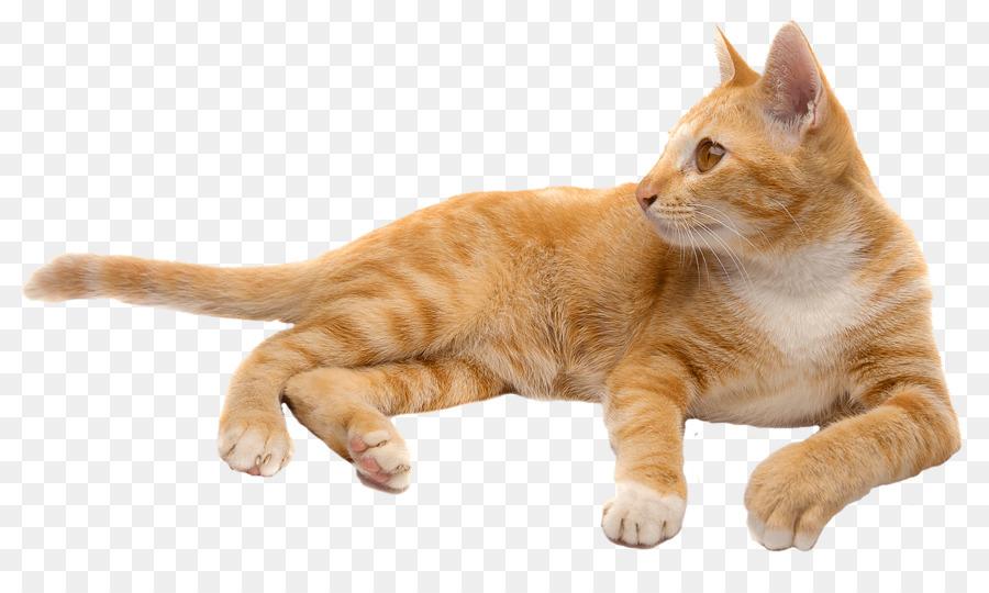 Картинка с кошкой на белом фоне