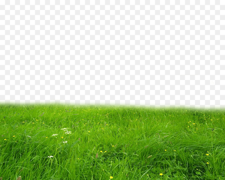 green grass png - 900×720