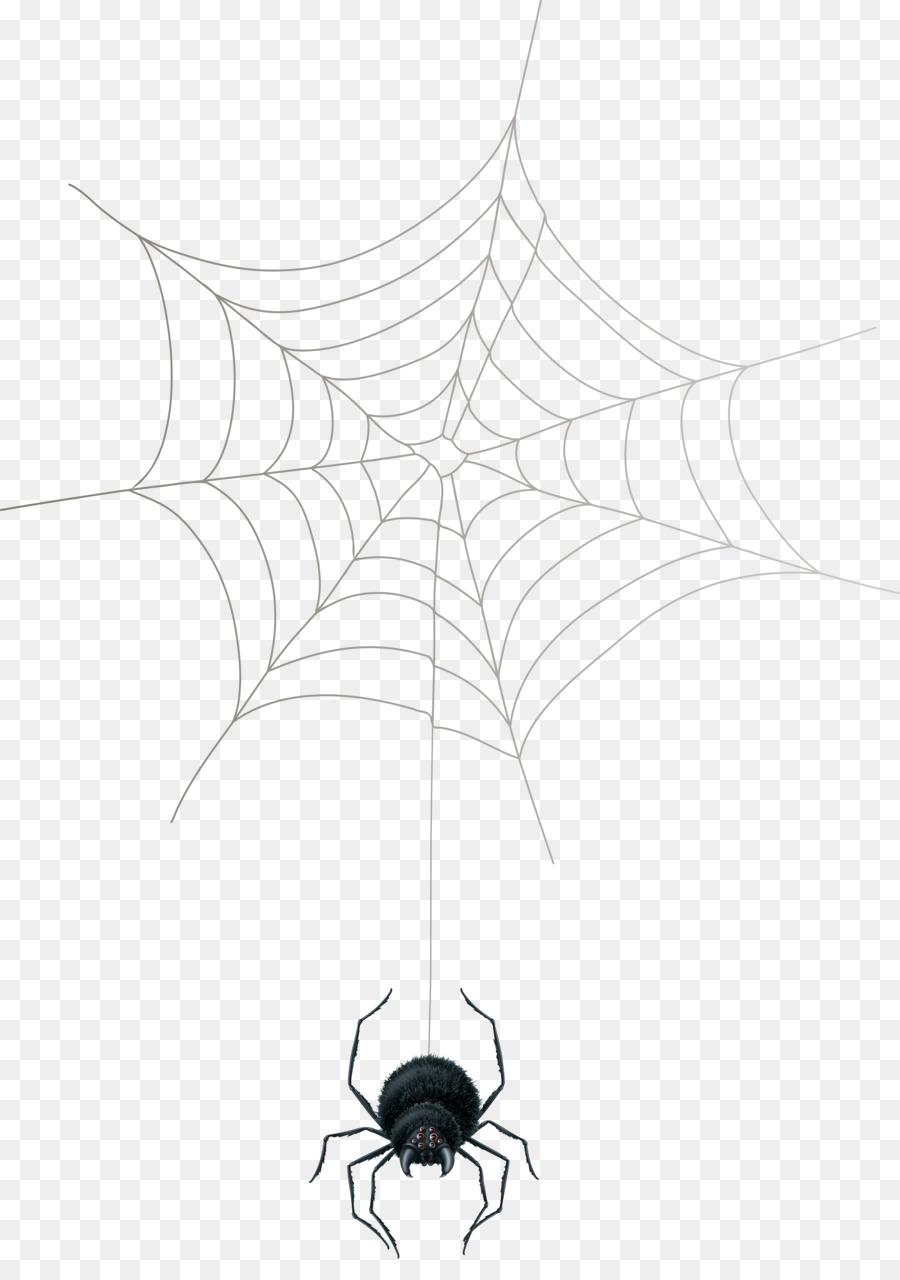это картинки пауков на паутине нарисовать родео, как