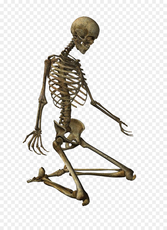 человек скелетов картинки состояла