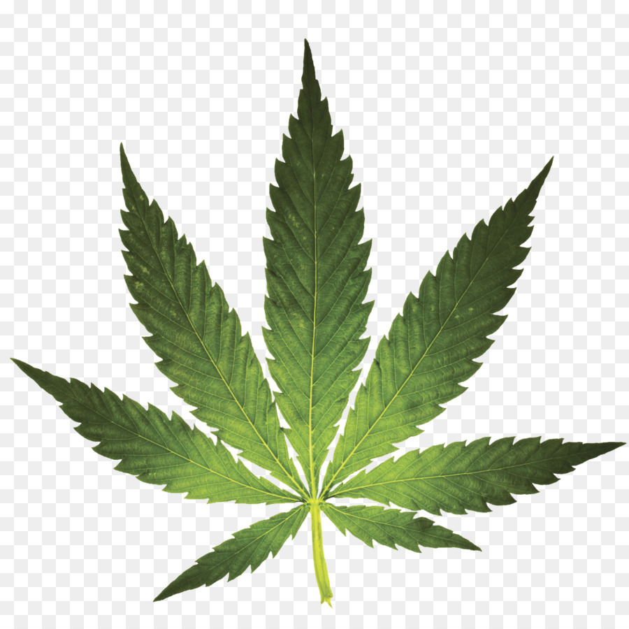 Коран о марихуане лечение подагры коноплей