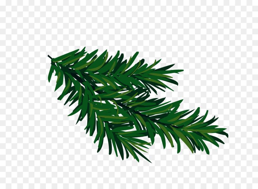 Картинка ветка елки на белом фоне