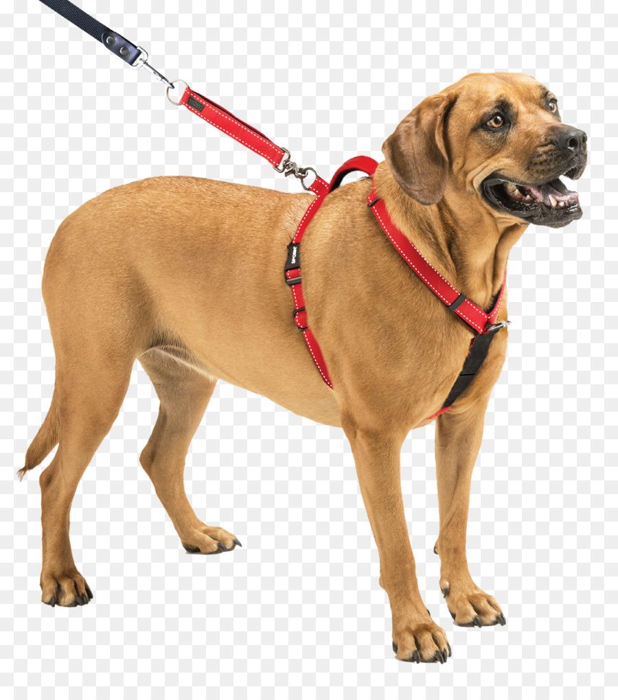 картинки поводок на собаке свое время удивите