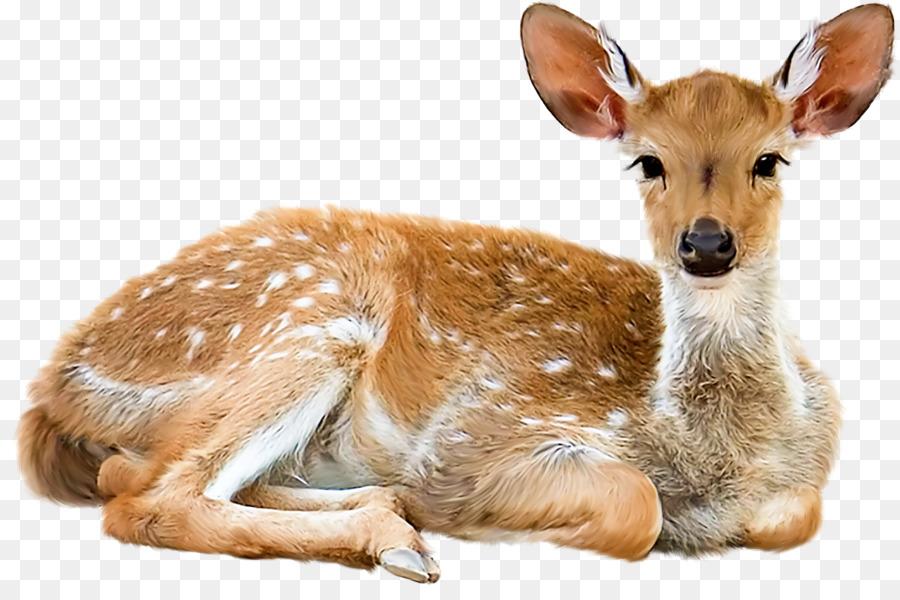 Картинки лесные животные на прозрачном фоне