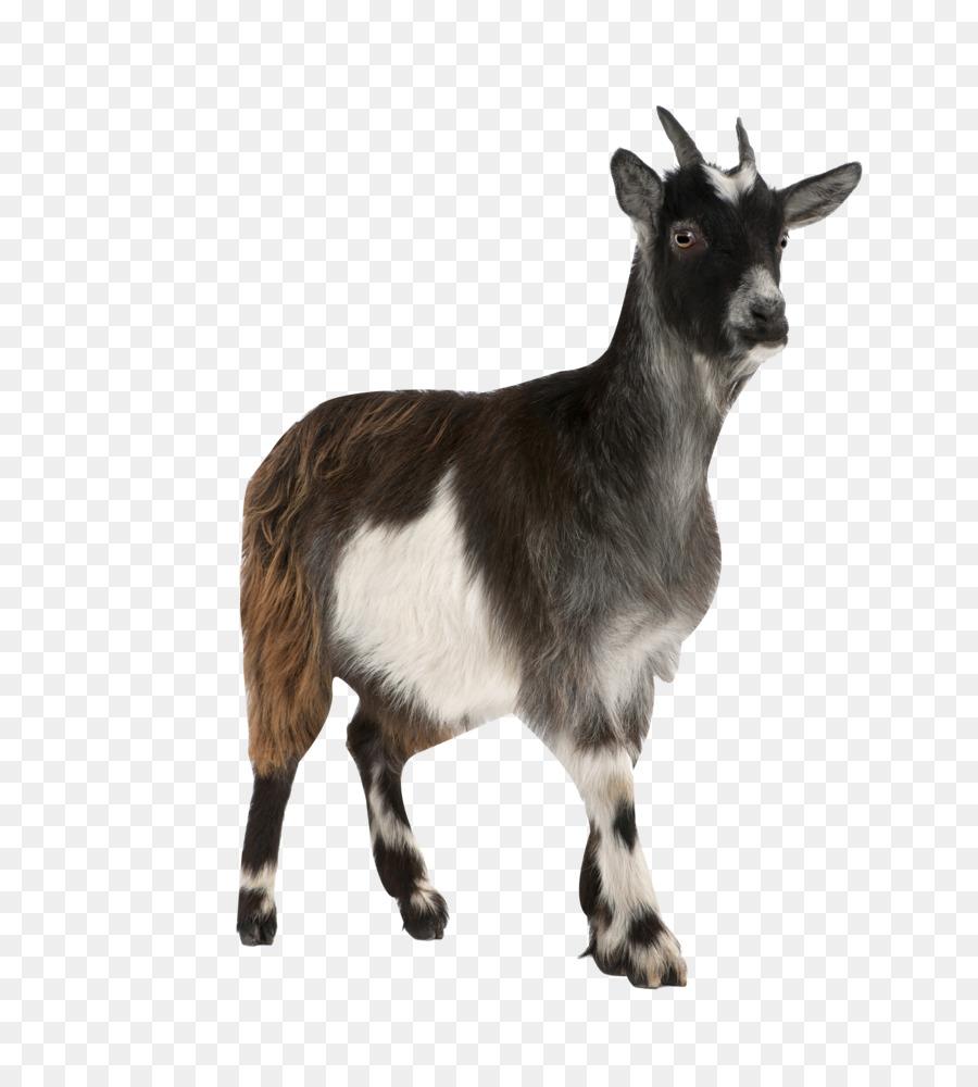 Картинки с надписью коза, картинки