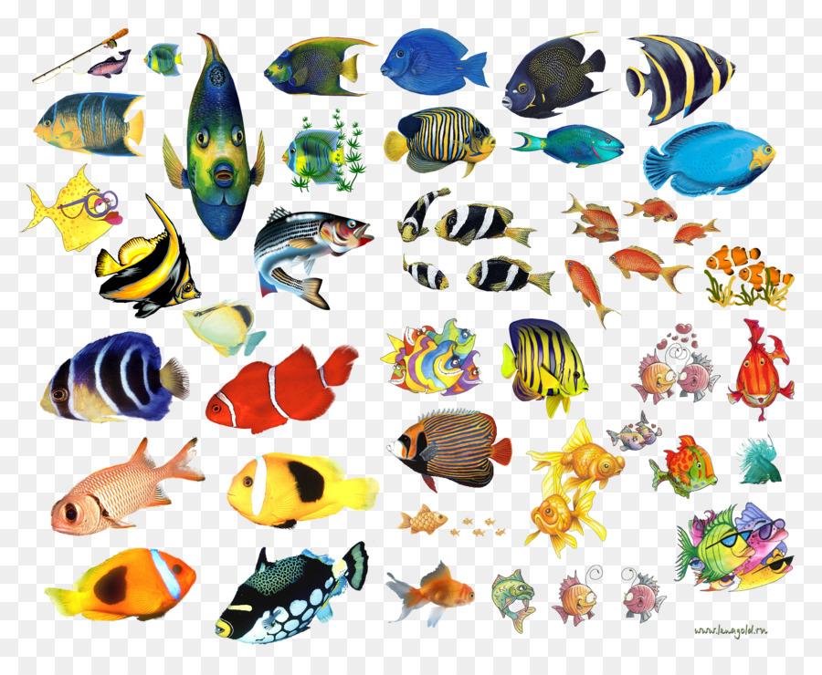 Морские рыбки картинки для детей нарисованные