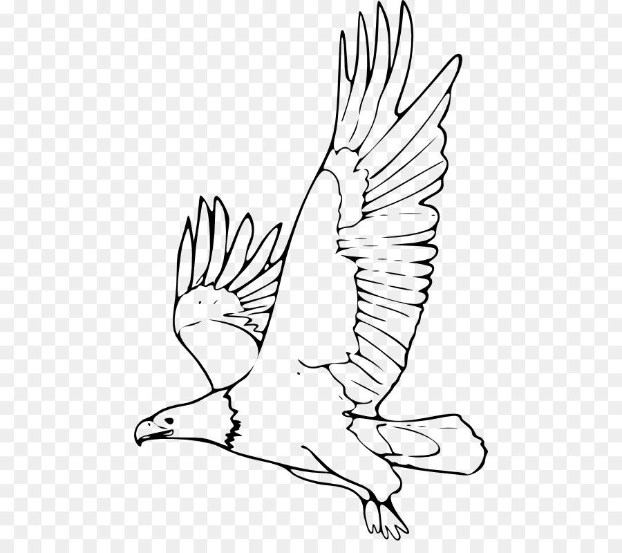 раскраска орел в полете ассортимент