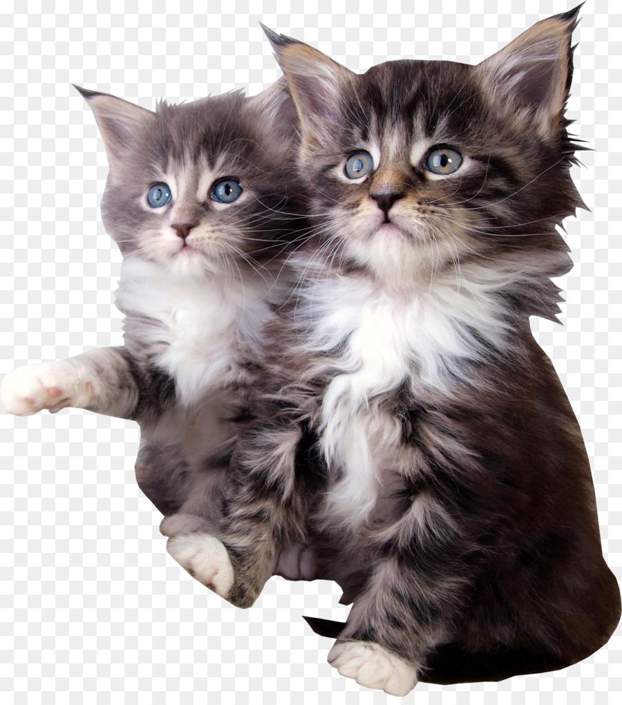 Спасибо тебе, картинки милые кошки животные