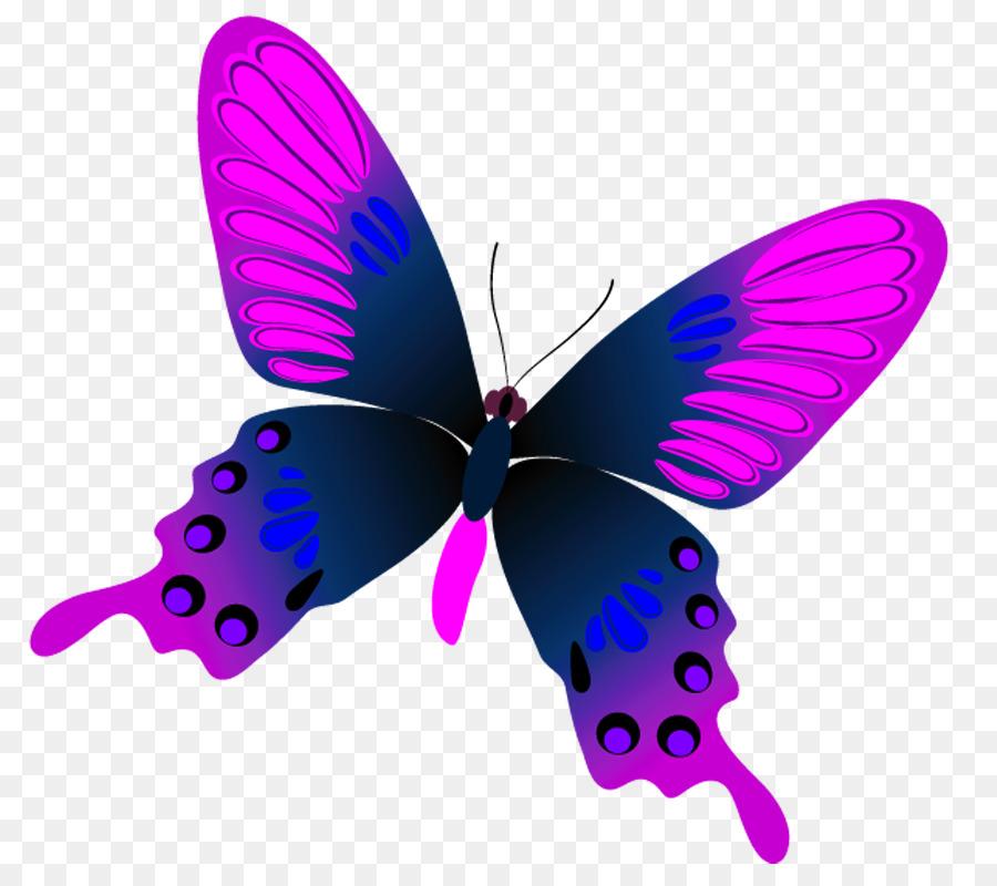 Картинка бабочек на белом фоне