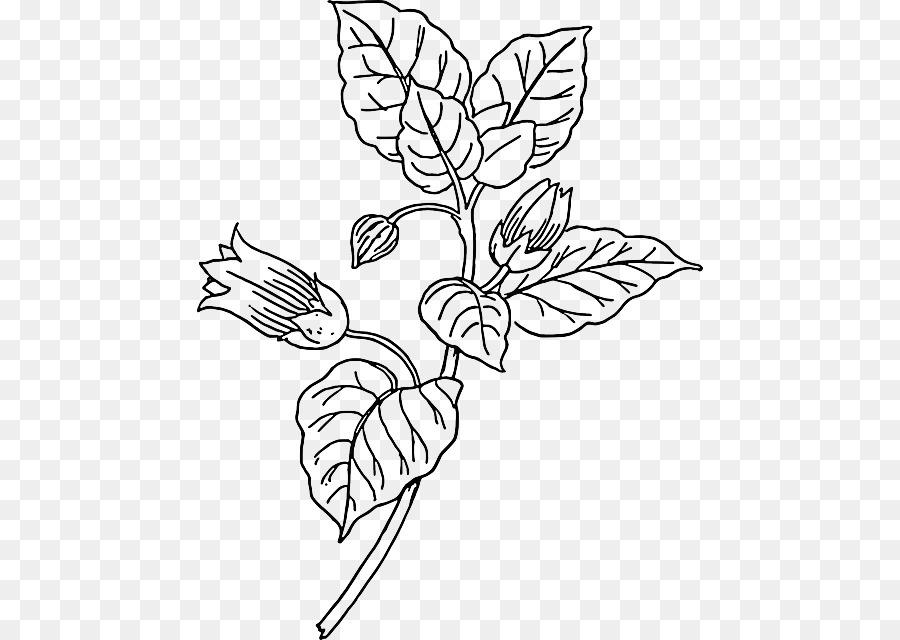 белладонна раскраска растение малыша дорожку