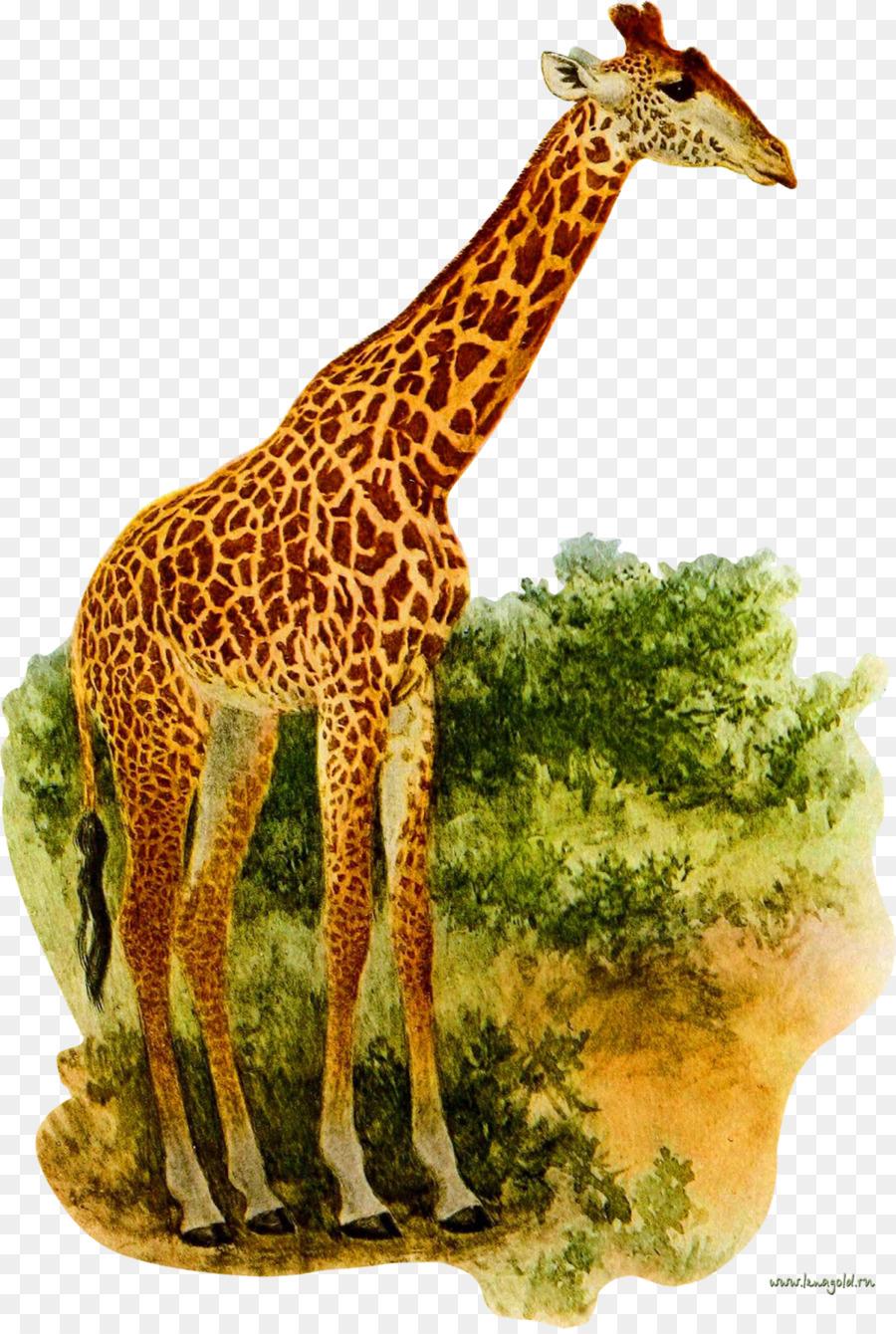 Картинки жираф для малышей