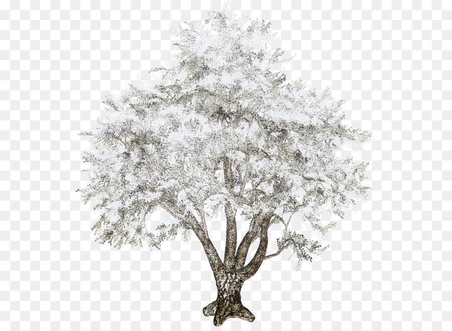 Картинки на прозрачном фоне зима деревья