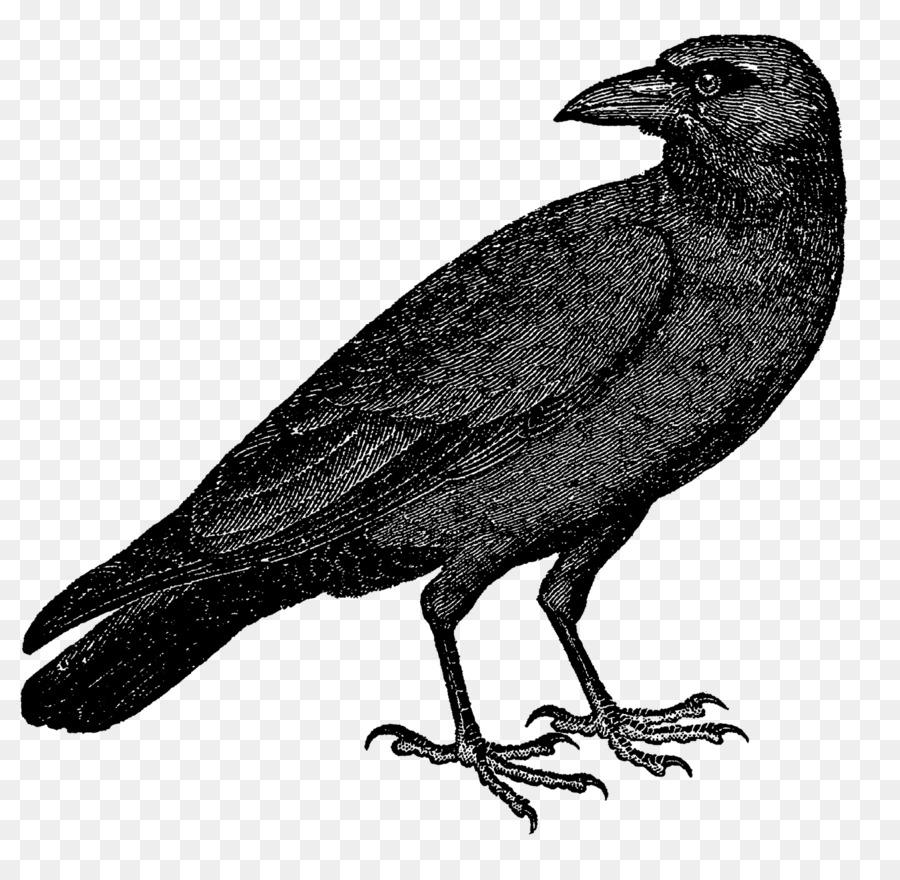 этим картинка или рисунок вороны настоящее время