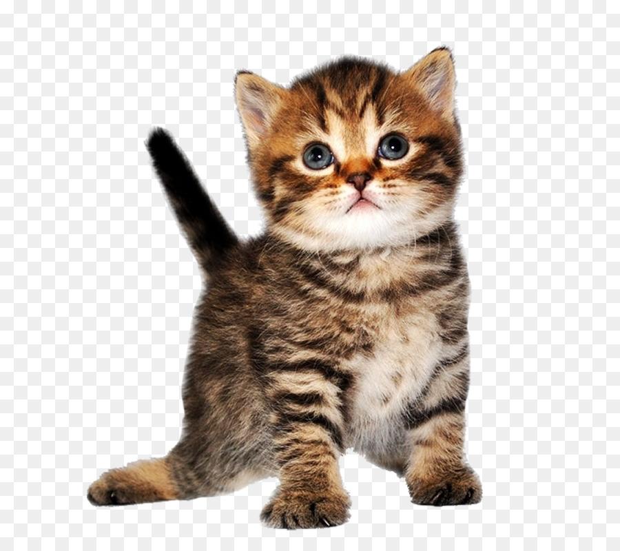 Котенок без фона картинка