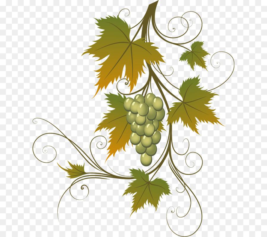 приобрести виноград картинки уголки много
