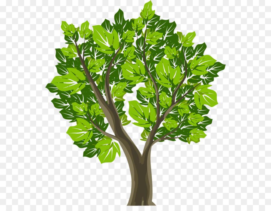 Картинка зеленое дерево для детей на белом фоне