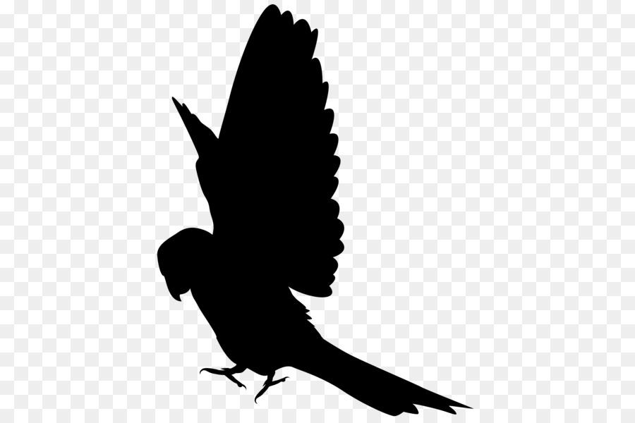 Лесные птицы средней полосы фото с названиями