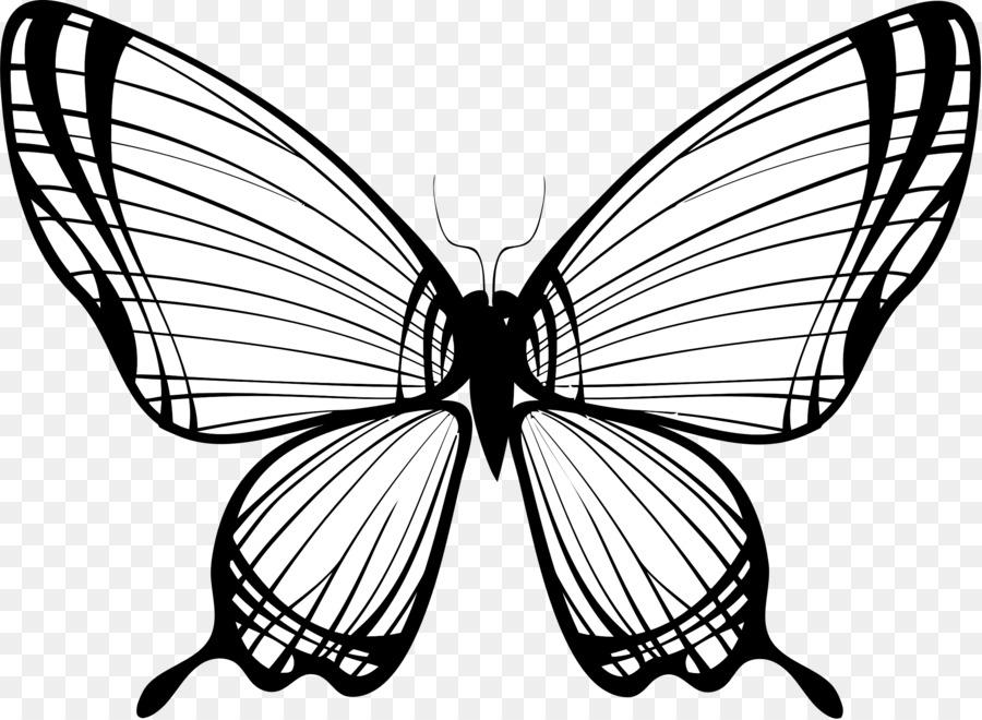 Картинки бабочки черно-белая