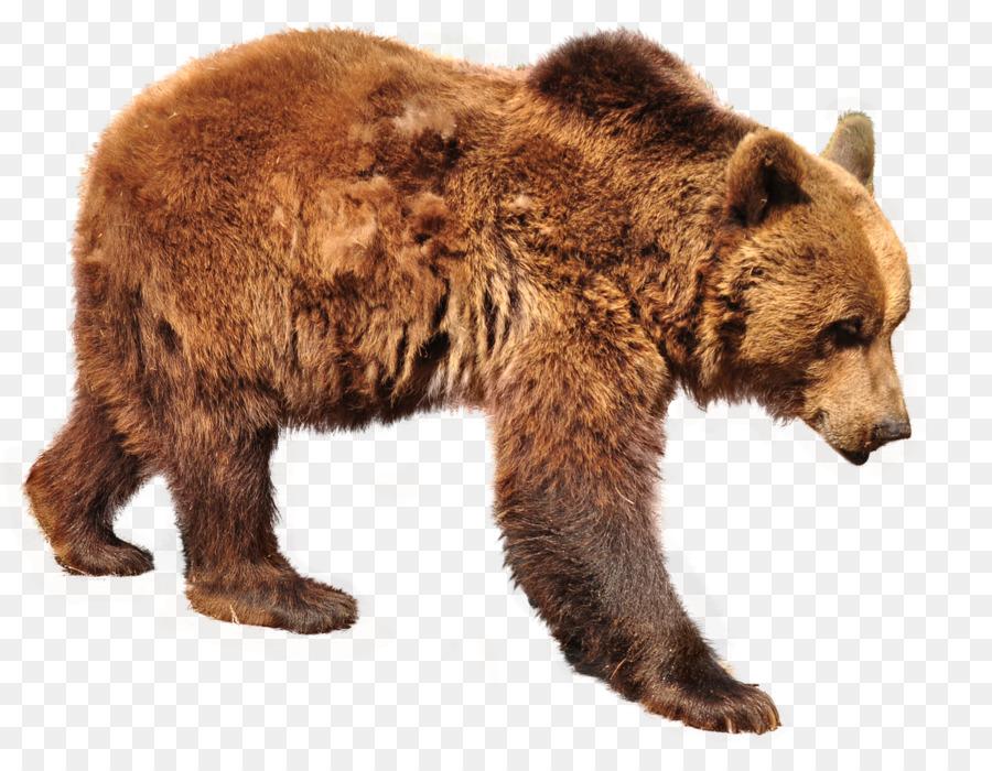 картинки для медведь на прозрачном фоне профилях