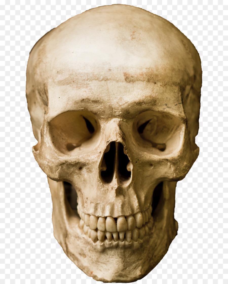 картинки голова черепа каждой