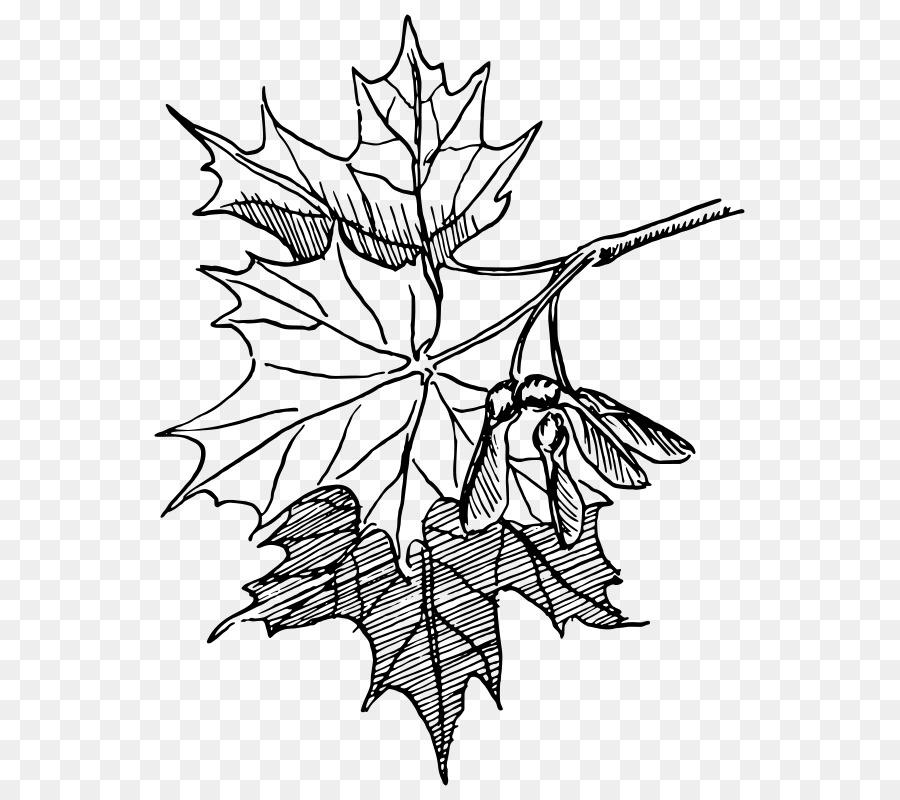 детали, связанные кленовые листья рисунки карандашом надо покупать первоцветы