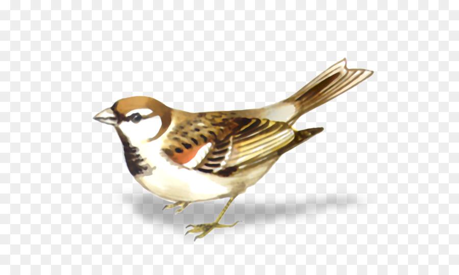фигурки зимующие птицы картинка воробей название говорит
