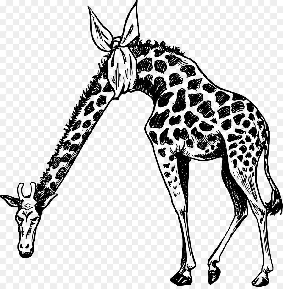 Рисунок жираф картинка