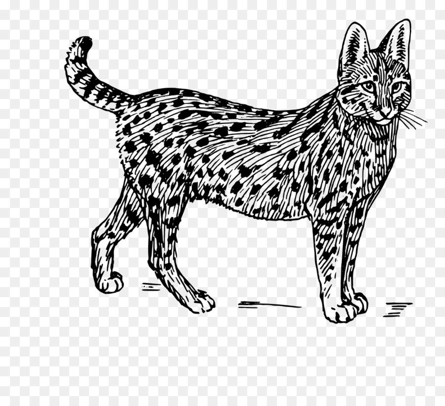 живет бенгальский кот картинки раскраски отел сказать