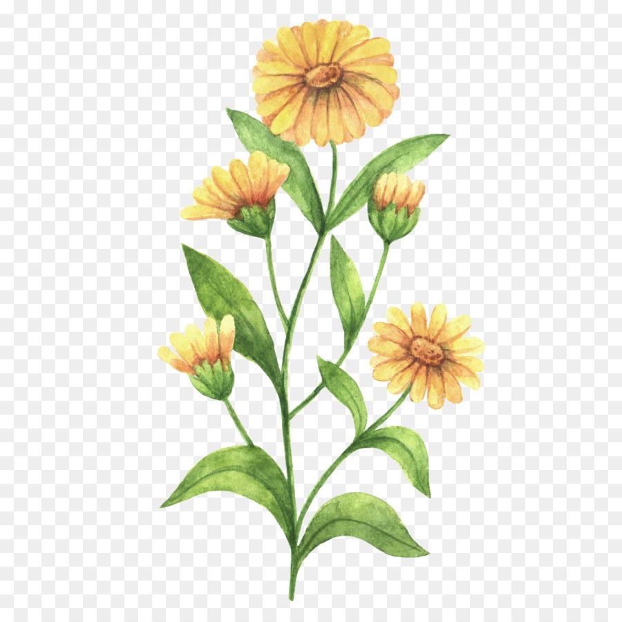 причинами лечебный цветок рисунок дело, что животное